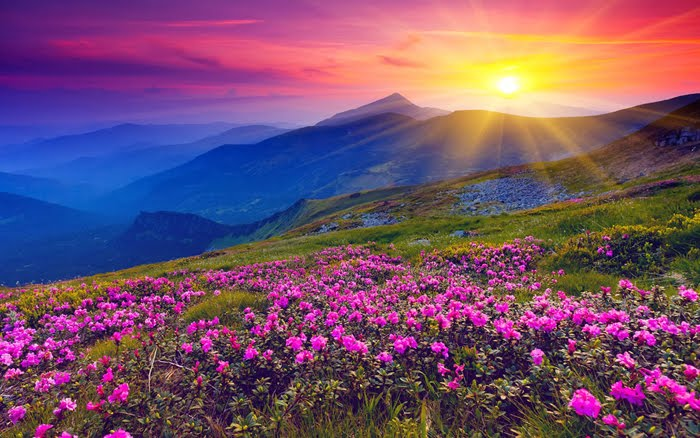 Delhi to Valley of Flowers Car Rental Services - Best Deal